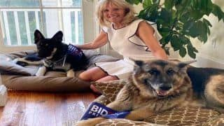 Return of The Pets to White House: Meet The Future First Dogs of US - Champ and Major Biden
