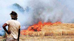 पराली जलने से रोकने को पंजाब ने 8,500 अफसर किए नियुक्त, दिल्ली तक में छा जाता है धुआं