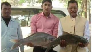 Bihar Election Results 2020: RJD Supporter Brings Fish For Tejashwi As Token Of Luck