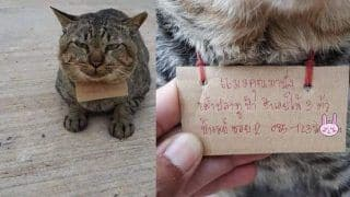 Missing Pet Cat Returns Home After Three Days, But After Incurring A Debt Note