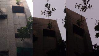 Amazing: 7 करोड़ का फ्लैट, छत से निकला पीपल का पेड़, प्रधानमंत्री कार्यालय पहुंची बात!