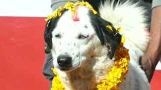 Diwali For Dogs: Nepal Celebrates 'Kukur Tihar' By Worshipping and Offering Food to Dogs