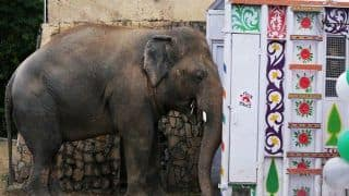 Kaavan, the World's Loneliest Elephant in Pakistan Finally Finds a New Home in Cambodia