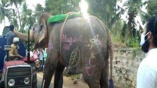 कमाल है! लगी प्यास तो तेलंगाना में हाथी ने रोका पानी भरा टैंकर, जी भर पिया पानी, देख हैरान रह जाएंगे आप...