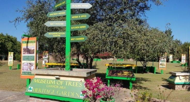 Chandigarh to get another landmark 'Museum of Trees' on Guru Nanak Jayanti