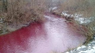 River in Russia Mysteriously Turns Blood Red, Animals Refuse to Enter 'Toxic' Water