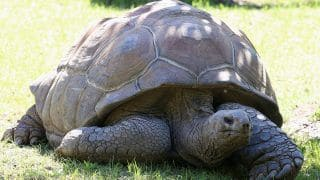 Aldabra Tortoise, Worth Over Rs 10 Lakh, Goes Missing From Chennai Park; Theft Suspected