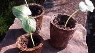 New Initiative: Lucknow to Make Flower Pots From Cow Dung Obtained From Animal Shelter