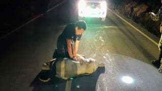 Baby Elephant Hit by Motorcycle in Thailand Survives After Receiving CPR | Watch Viral Video