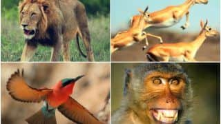 Music Group Creates 'Saare Jahaan Se Achha' Using Sounds of Animals, Video Goes Viral | Watch