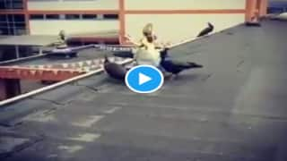 Viral Video: मां सरस्वती की मूर्ति की परिक्रमा करते रहे मोर, जिसने देखा हाथ जोड़ लिए...