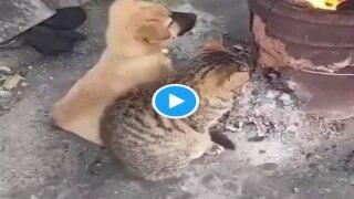 Viral Video: कड़कड़ाती ठंड में बिल्ली-कुत्ता बन गए दोस्त, साथ बैठकर सेंकी तंदूर की गर्मी, देखें...