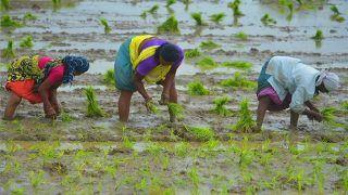 PM Kisan Samman Nidhi: बंगाल में 23 लाख किसानों ने कराया पंजीकरण, अब तक खाते में नहीं आया एक भी रुपया