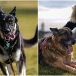 Pets Are Back! First Dogs Champ & Major Officially Move in to White House, Pictures Go Viral