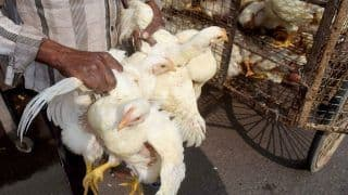 Bird Flu Scare in Delhi: Ghazipur Fish and Poultry Market on High Alert, Samples Being Tested
