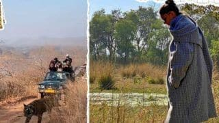 Deepika Padukone Closely Captures Tiger Crossing Path in Ranthambore National Park-Watch