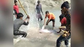 Video Captures 3 Men Using Axe and Lathis To Kill Rare Gangetic Dolphin, Laugh After Watching Blood