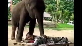 Video of an Elephant Massaging a Woman with its Trunk Goes Viral | Watch
