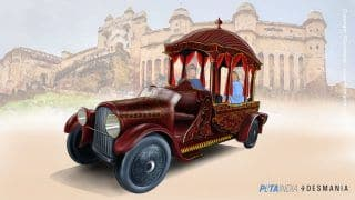 No More Cruel Elephant Rides? PETA India Submits Design of Electric Chariot to Replace Elephants at Amer Fort