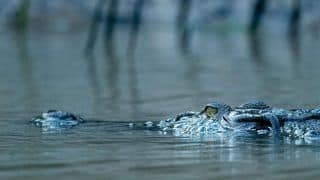 World's Largest White Crocodile Park in Odisha Reopens For Tourists