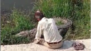 Viral Video: नदी किनारे मगरमच्छ की पीठ पर हाथ फेरते हुए बातें कर रहा था शख्स और फिर...