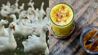 Ayurvedic Tips to Follow Amidst Bird Flu Outbreak to Keep The Disease at Bay