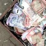 Man Loses Life Savings As Termites Eat Cash Worth Rs 5 Lakh Stored in Iron Trunk