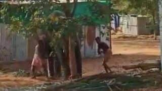 Video: Elephant Beaten Mercilessly by Mahouts in Tamil Nadu While it Cries in Pain, Sparks Outrage | Watch