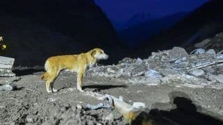 The Endless Wait: Dog Searches For Her Lost Puppies in Uttarakhand's Chamoli After Flash Floods