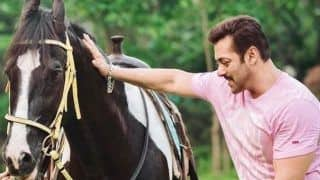Fraudsters Offer to Sell Horse Owned by Salman Khan, Dupe Jodhpur Woman of Rs 12 Lakh!