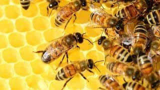 15 Million Baby Bees Could be Seized And Burned in This Country | Here's Why