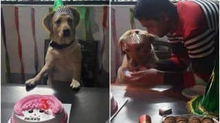 Awwdorable! Muzaffarnagar Police Celebrates Sniffer Dog's 3rd Birthday With a Special Cake