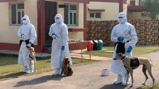 Indian Army Cuts Wait Time For COVID-19 Tests By Training Desi Dogs to Sniff Virus   Watch Video