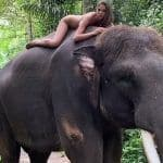 Instagram Influencer Poses Naked on An Endangered Sumatran Elephant in Bali, Triggers Outrage   Watch