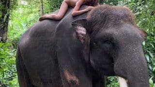 Instagram Influencer Poses Naked on An Endangered Sumatran Elephant in Bali, Triggers Outrage | Watch