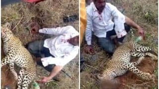 Karnataka Man Strangles Leopard to Death in Battle of Survival, Hailed as Real Life George Kutty