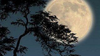 Full Moon 2021: Stunning Photos, Videos Capture Snow Moon's Beauty Around The World