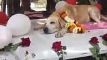 Sniffer Dog 'Spike' Part Of Nashik Bomb Squad Given Heartwarming Farewell. Watch Video