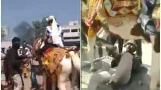 Viral Video: Wedding Horse Runs Away With Groom in Gujarat's Patan As 'Baaratis' Chase Them | Watch