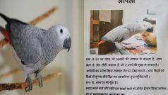 Mitthu Parrot: अंग्रेजी बोलने वाला मिट्ठू तोता गायब, जाने वाला था इंग्लैंड, UP Police कर रही तलाश