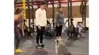 Dog In Gym: कुत्ते ने जिम जाकर जमकर की Burpees, देखने वालों का मुंह खुला रह गया...