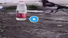Crow Video: कौए ने बोतल में डाले कंकड़, जुगाड़ से पिया पानी, याद आ जाएगी पुरानी कहानी...