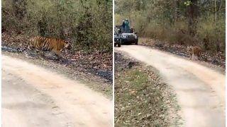 Ravindra Jadeja Shares Video of Tiger Spotted During Jungle Safari, Says