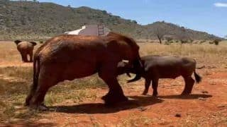 Elephant And His 'Bhens Friend' Are The New Jai-Veeru | Watch Viral Video