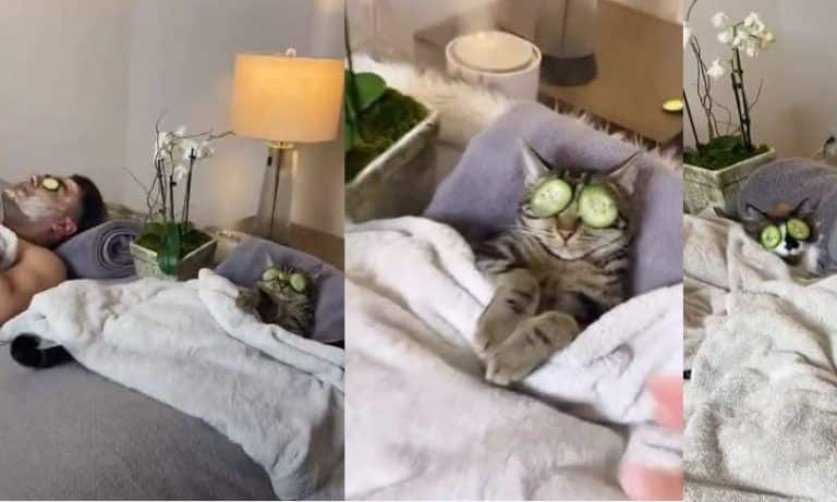 This Video of a Cat Relaxing and Enjoying Spa Day with its Owner is Going Viral| Watch