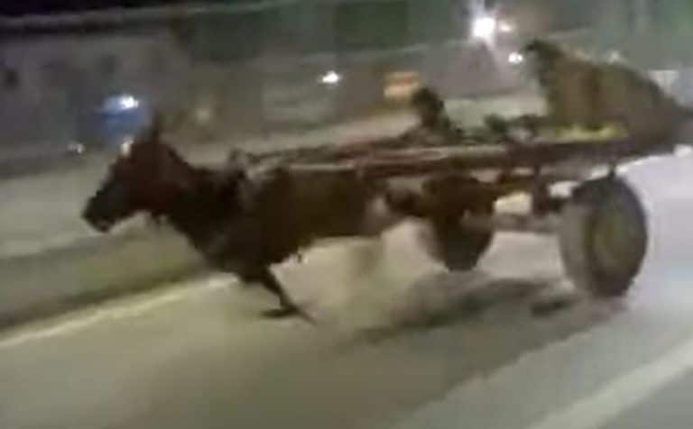 Racing Donkey? Video of a Donkey Running on a Busy Road is Going Viral| Watch