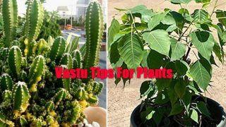 Vastu Tips For Plants: List of Plants You Should Never keep Inside The House