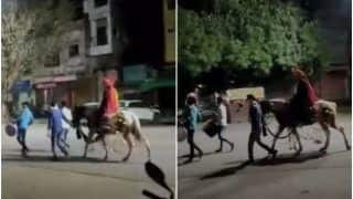 Band, Baaja But No Baarat? Video of Groom On an Empty Street Shows How Weddings Have Been Hit by Covid | Watch