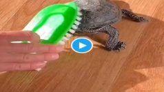 Dancing Tortoise Video: कछुए ने किया झमाझम डांस, लोग बोले- भैया ये तो स्लो नहीं...