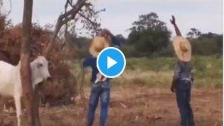 OX Video: बैल को आया गुस्सा, दो लोगों को एक साथ पटका, लोग बोले- आ बैल मुझे मार...